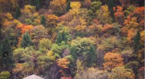 【红韵山水】光雾山·明月峡·雪溪洞阆中古城·八尔湖三华体会全站app